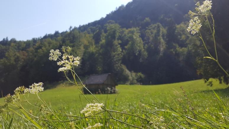 Quels sont les plus beaux endroits de Slovénie ?